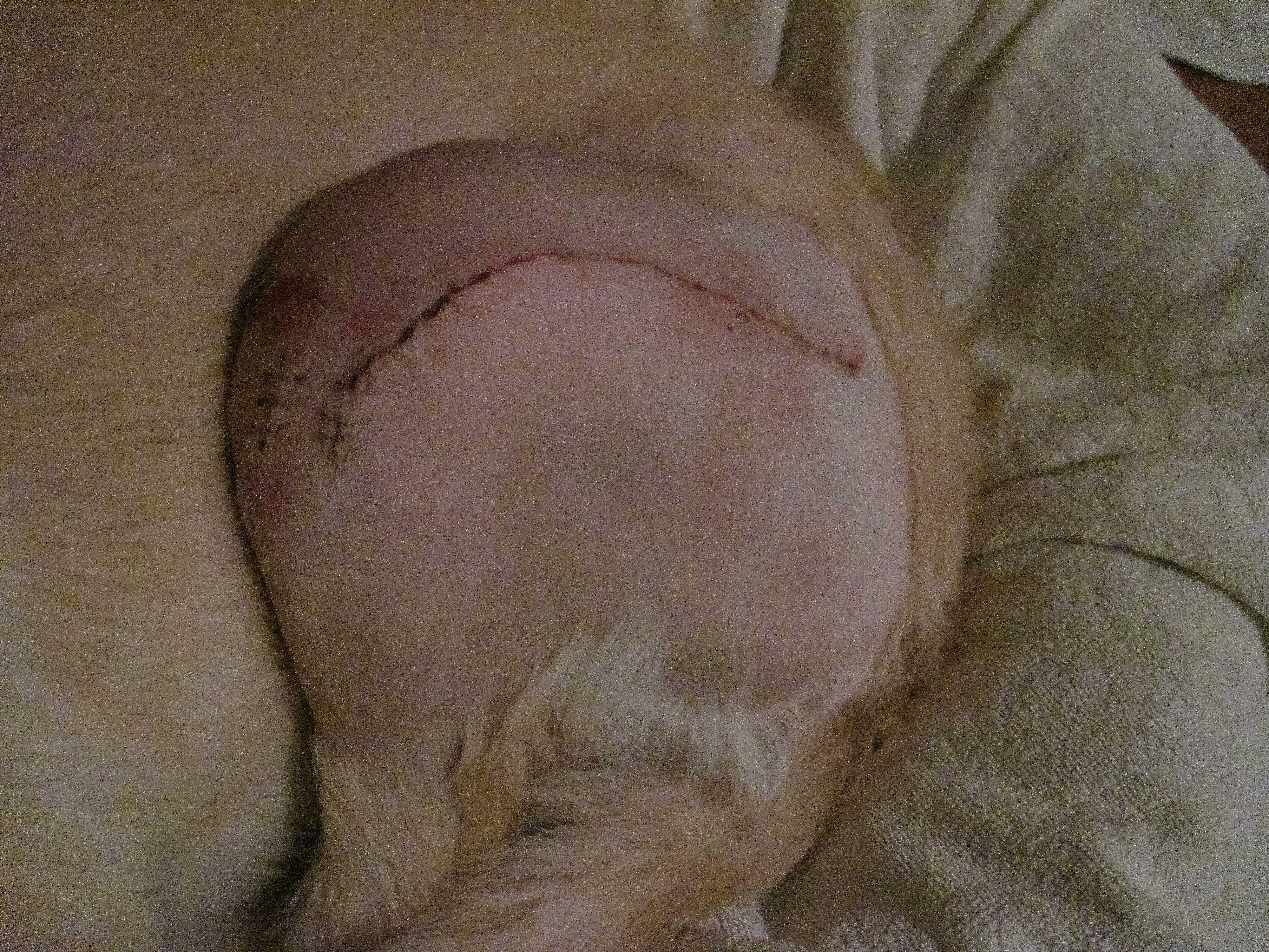 Läkning av sår efter operation